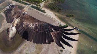 eagle-indonesia_2975314k